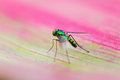 Green and pink beautiful macro of a fly on a leaf in madagascar Royalty Free Stock Images