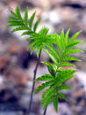 Green plant. Royalty Free Stock Images