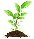 Verde planta