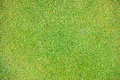 Green plant background young grass Royalty Free Stock Photos