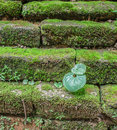 Green plant on brick old temple wall Stock Image
