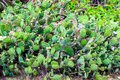 Green plant cactus needle tip. Mexico Yucatan Royalty Free Stock Photo