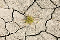 Green Plant in Dry Earth Royalty Free Stock Photo