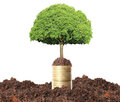 Green plant on gold coins the Royalty Free Stock Photo