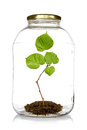Green plant grow inside glass jar on white background Stock Photo