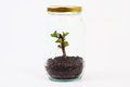 Green plant grow inside glass jar on white background Royalty Free Stock Photo