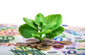Green plant growing on banknotes and euro coins Royalty Free Stock Photo