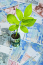 Green plant growing from euro bills Royalty Free Stock Photo