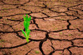Green plant growing out of cracks in the earth Royalty Free Stock Photo