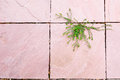 Green plant growing between pink surface concrete floor gap in beautiful shape. hope of life abstract background High-key. Royalty Free Stock Photo