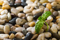 Green plant growing in stones closeup of small among small or pebbles Stock Photos