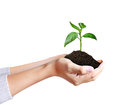 Green plant in a hand Royalty Free Stock Photography