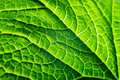 https---www.dreamstime.com-stock-photo-organic-abstract-background-closeup-rose-leaf-macro-organic-plant-leaf-background-macro-image107129708