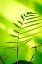 Green plant on light background Royalty Free Stock Photos