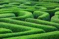 Green plant maze Royalty Free Stock Photo