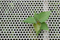 Green plant in metal sheet Royalty Free Stock Images