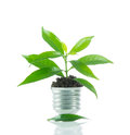 Green plant new life on lamp out of a bulb green energy concept over white background Stock Image
