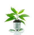 Green plant new life on lamp out of a bulb green energy concept over white background Royalty Free Stock Photography