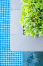 Green plant and pool Stock Photos
