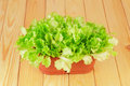 Green plant in pot lettuce on wooden background Royalty Free Stock Photos