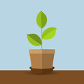 Green plant in a pot with a shadow in a flat design