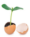 Green plant sprouting from the ground in an eggshell on white background Royalty Free Stock Photos