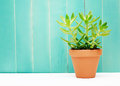 Green Plant on a Teal Colored Wall Background Royalty Free Stock Photo