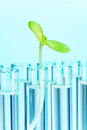 Green plant in test tube filled with water Royalty Free Stock Photo