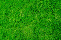 Green plant wall lush carpet of clover Stock Image