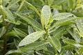 Green Plant With Water Droplets