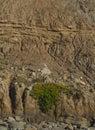 Green plants on big cliff