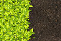 Green plants growing Royalty Free Stock Image