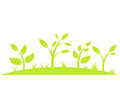 Green plants growing in nature vector illustration Stock Photo