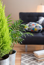 Green plants in the living room Royalty Free Stock Photo