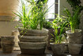 Green plants in old clay pots near the window Royalty Free Stock Photos