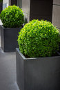 Green plants in a pot nature background Stock Photos