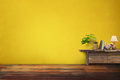 Green plants pottery vase on drawer wooden in empty yellow vinta Royalty Free Stock Photo