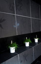 Green plants in tiled bathroom Royalty Free Stock Photo