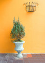 Green plants on vintage vase with wall Stock Photo