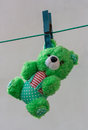 Green plush bear toy hanging on clothes peg on clothesline Stock Photo