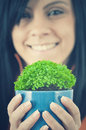 Green potted Stock Photography