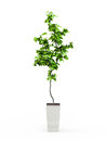 Green potted plant Royalty Free Stock Photo
