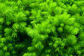 Green prickly bush Royalty Free Stock Photos