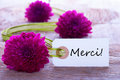 Green purple baclground with merci a and flower background a label the french word which means thanks Royalty Free Stock Images