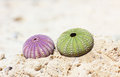 Green and purple see urchin at the beach sandy Royalty Free Stock Photos