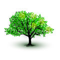 Green realictic tree with leaves isolated on white background