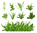 Green realistic spring grass. Fresh plants, garden seasonal growth grass, botanical greens, herbs and leaves vector Royalty Free Stock Photo