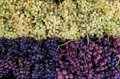Green, red, black grapes in the greek vegetable shop. Royalty Free Stock Photo