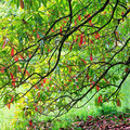 Green-red tree foliage in spring park Stock Photography