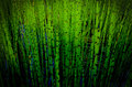Green reeds in a wetland area close up Stock Photography